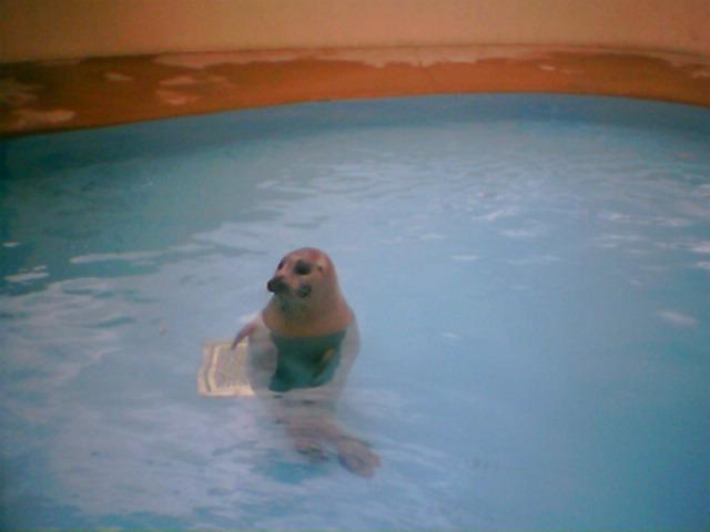 Natureland Seal Sanctuary, Skegness, Lincolnshire - Kids Days Out ...