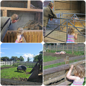 family days out south wales