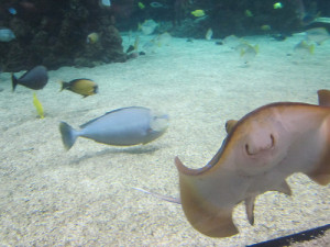 aquariums in england