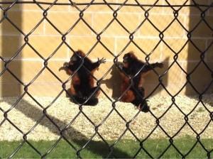 Bishop Burton zoo