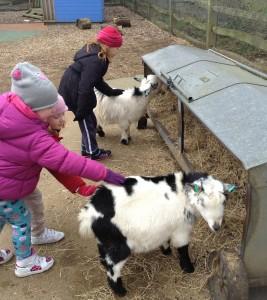 London Zoo goats