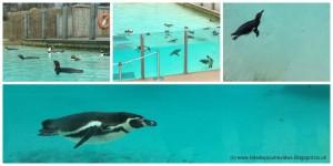 London Zoo penguin beach