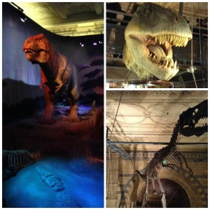 Natural History Museum T-Rex