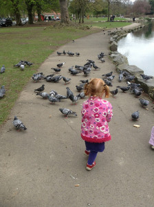 Pearson Park Hull