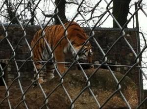 Dartmoor Zoo