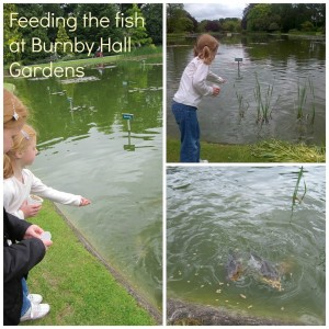 Feeding the fish at Burnby Hall Gardens