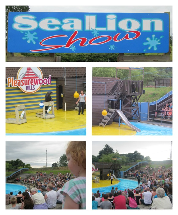 The seal lion show at Pleasurewood Hills