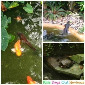 Animals at Tropical World Leeds