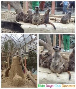 Meerkats at Tropical World Leeds