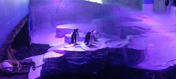 Penguins at The Deep Hull