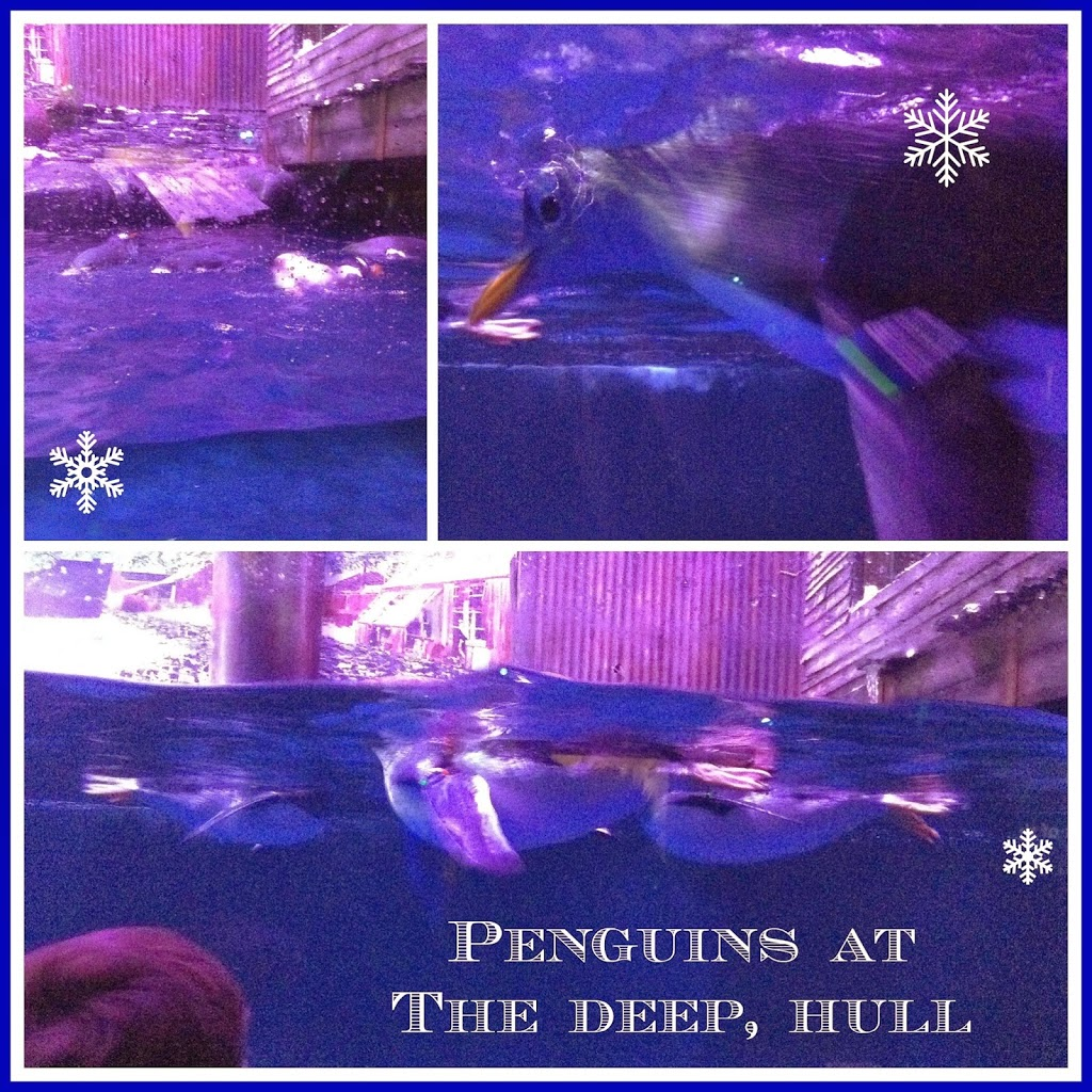 Penguins at The Deep Hull review