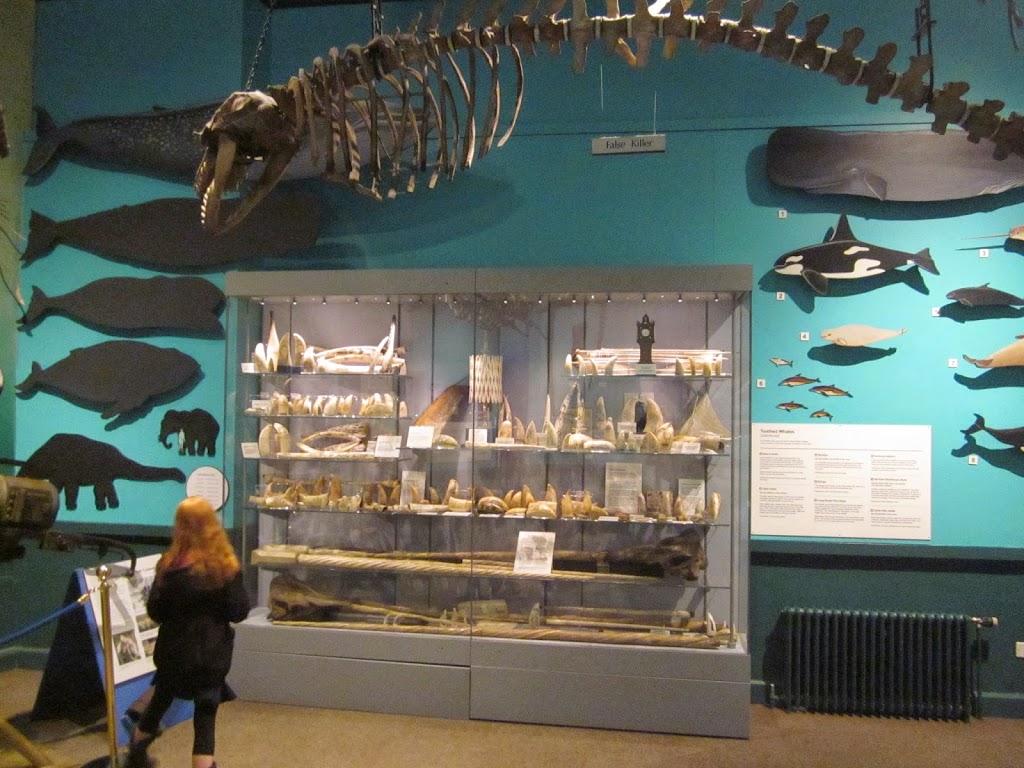 Maritime Museum Hull