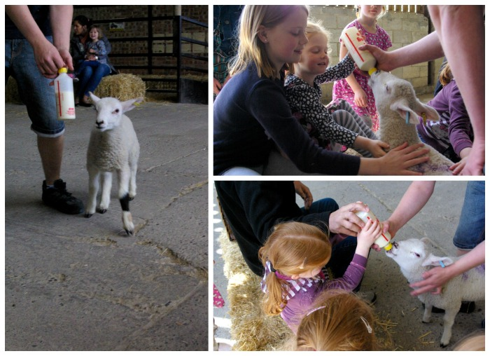 Feeding the lambs at Playdale Farm Park