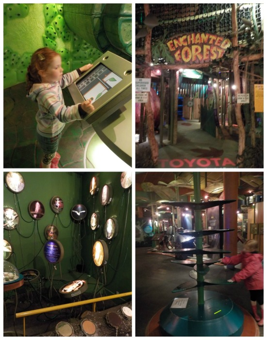 Interactive exhibits at Conkers