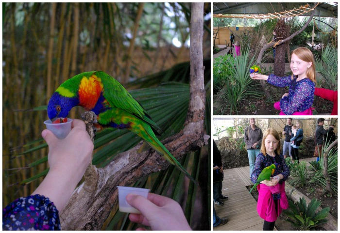 Feeding the lorikeets at Twycross Zoo