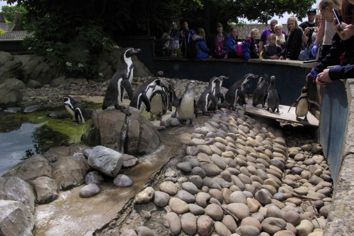the penguin enclosure at Twycross Zoo