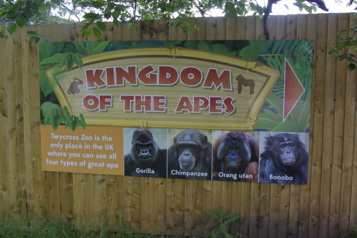 Kingdom of the Apes at Twycross Zoo