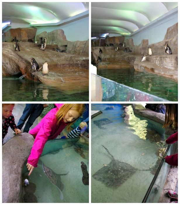 Penguins and rays at Longleat Safari Park