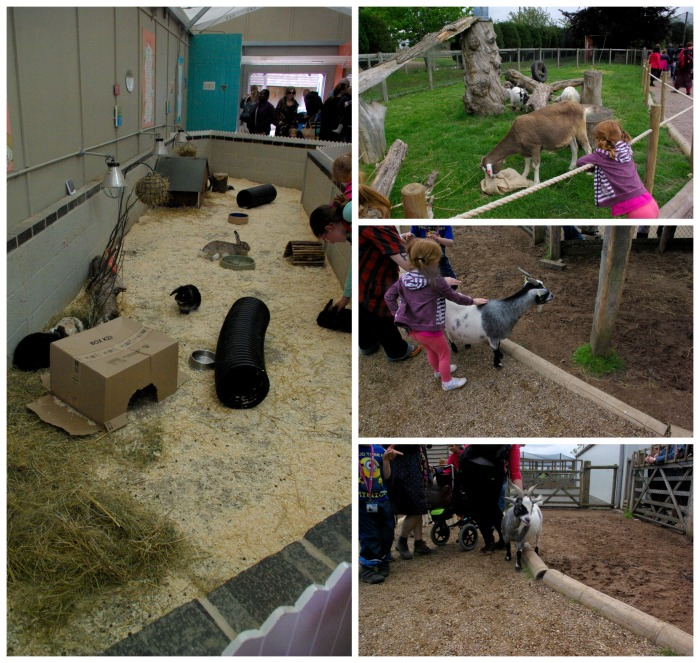Pets corner and the naughty goats at Twycross Zoo