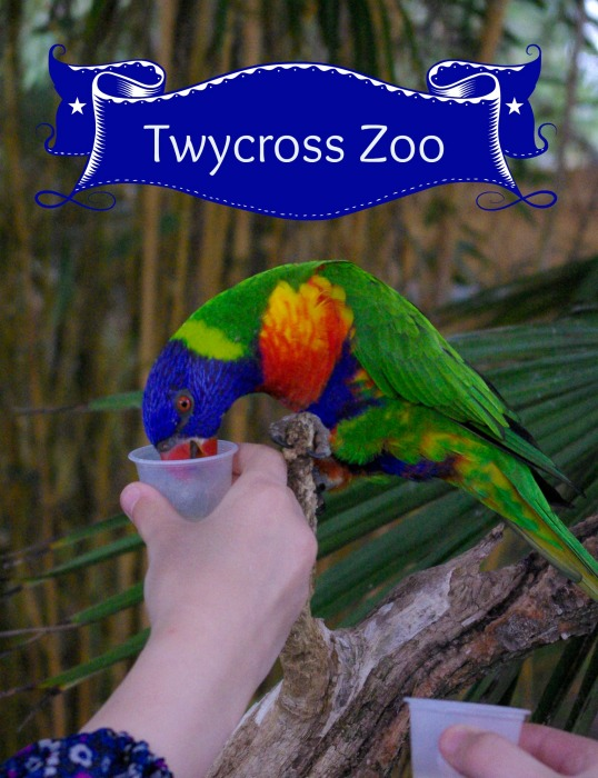 Twycross Zoo - Review
