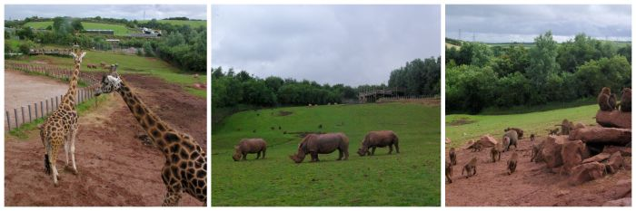African animals at South Lakes Safari Zoo