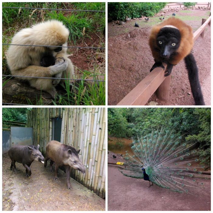 Animals at South Lakes Safari Zoo