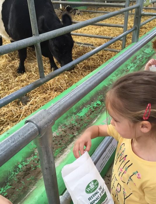 Feeding the animals at Willows Activity Farm