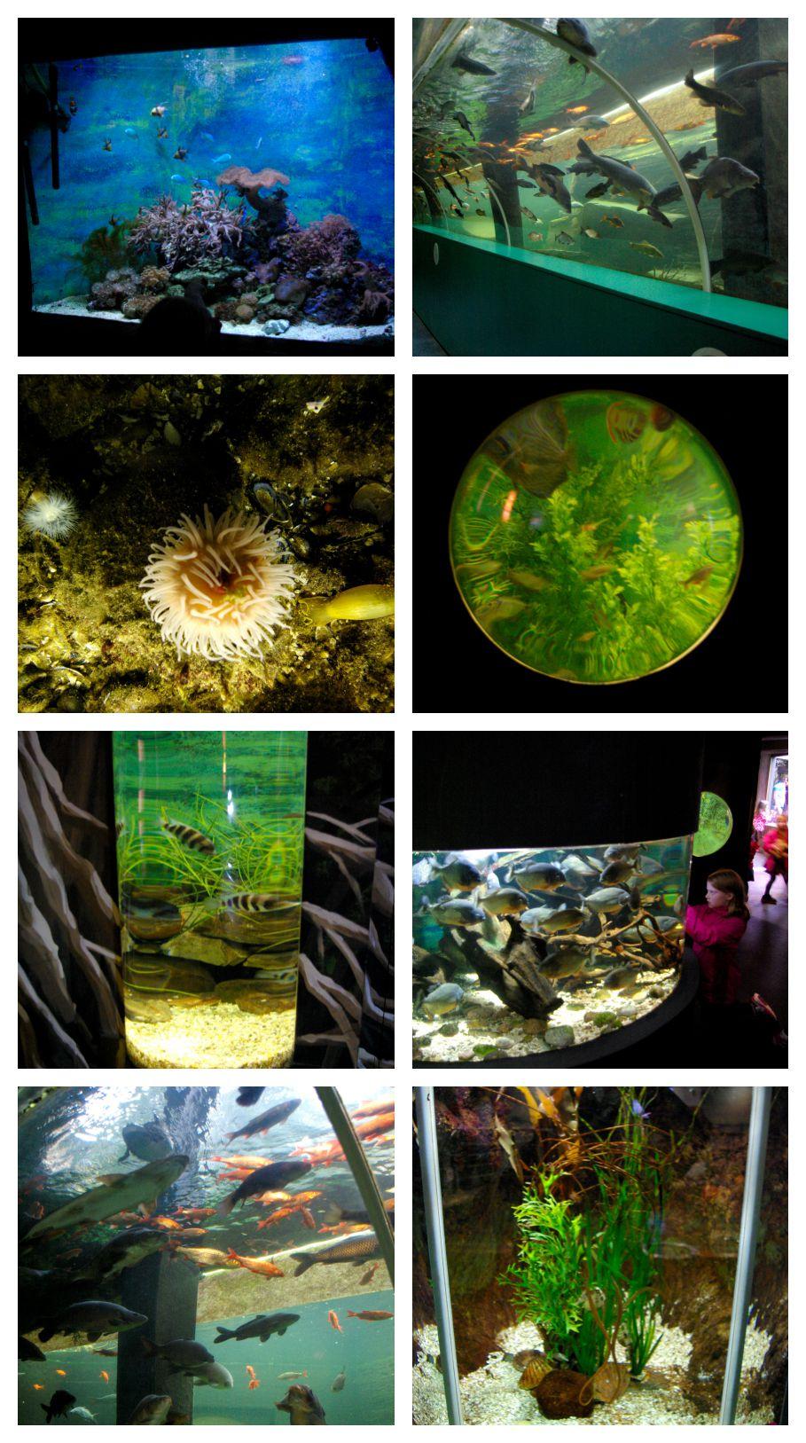 Fish and other exhibits at Lakes Aquarium