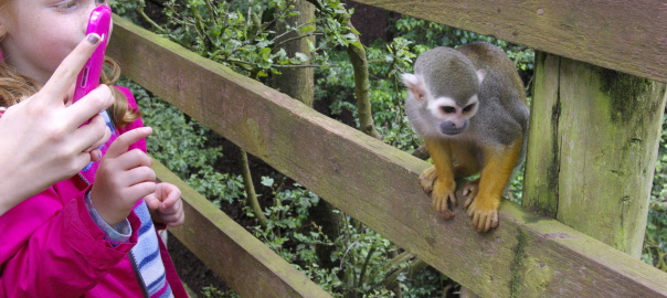 Squirrel monkeys at South Lakes Safari Zoo