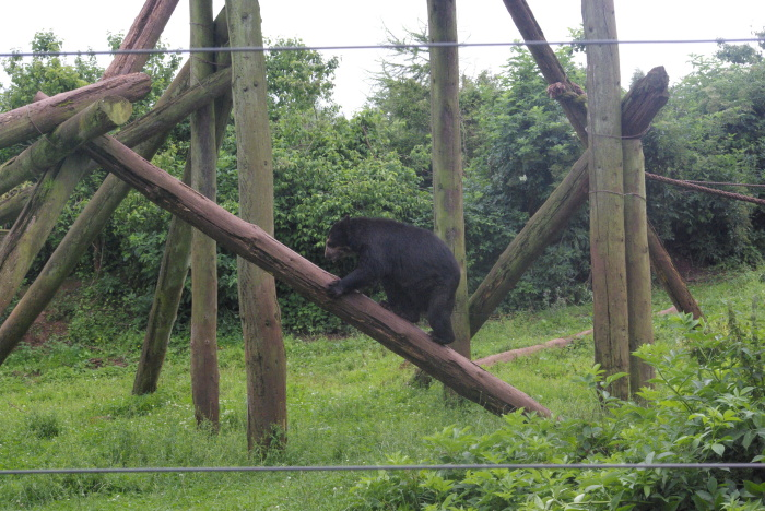 Bear at South Lakes Safari Zoo