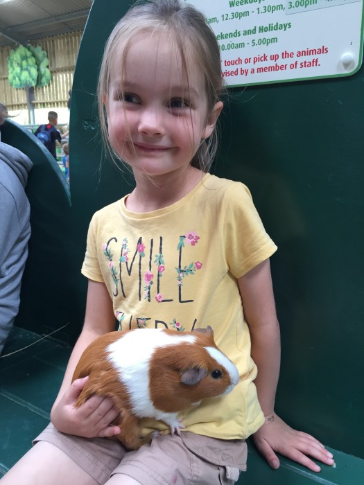 Guinea Pigs at Willows Activity Farm