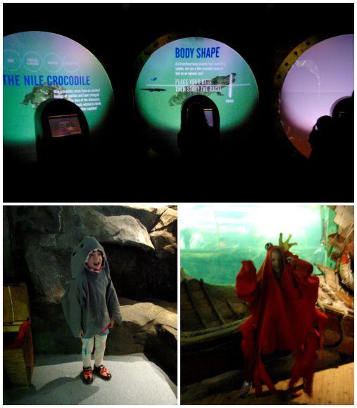 Interactive exhibits and dressing up at Lakes Aquarium