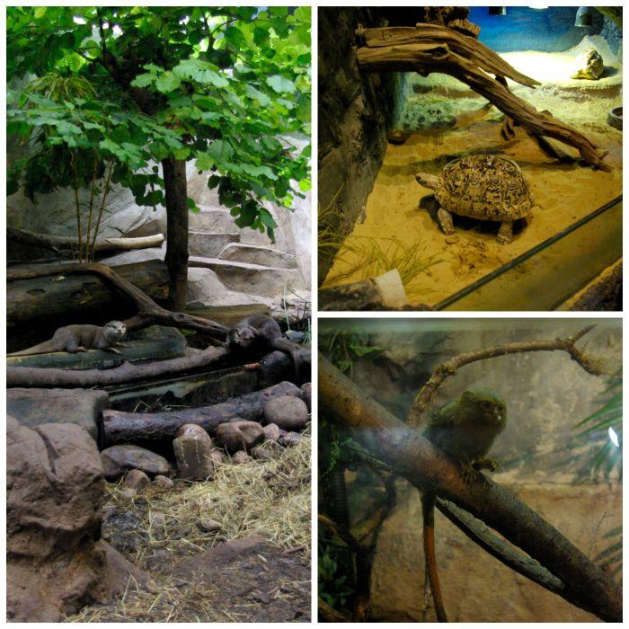 Otters, tortoises, and tamarins at Lakes Aquarium