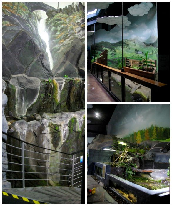 Scenery at Lakes Aquarium