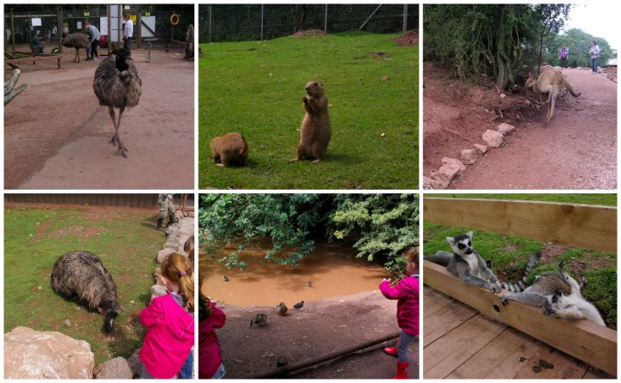 The Worldwide Safari at South Lakes Safari Zoo