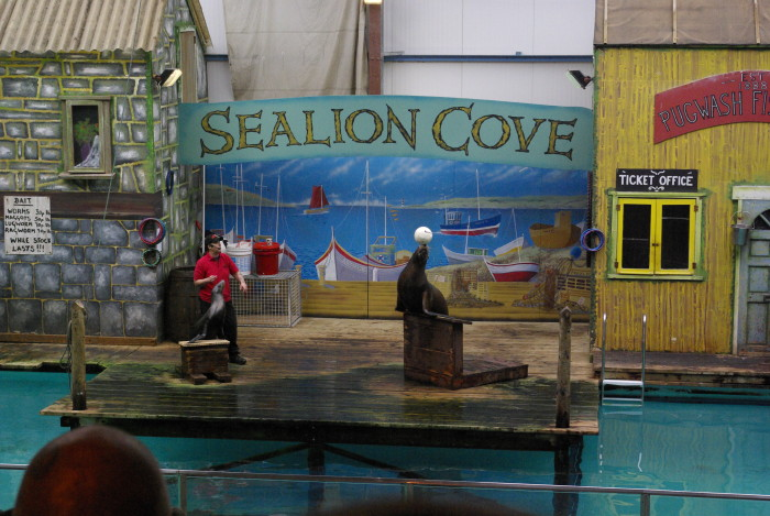 The Sea Lion show at Knowsley Safari Park