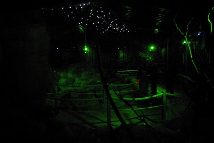 The bat house at Knowsley Safari Park