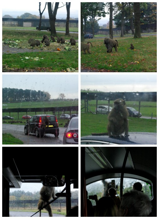 The baboon enclosure at Knowsley Safari Park