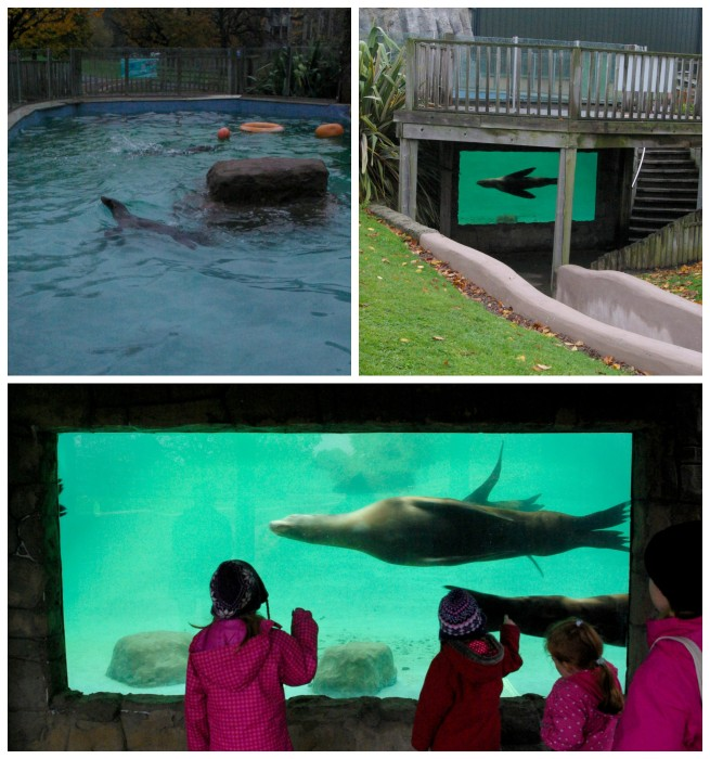The sealions at Knowsley Safari Park
