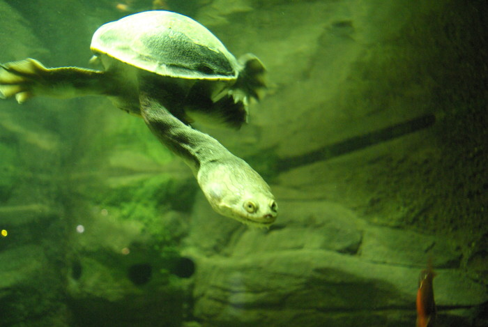 Turtles at Sea Life Manchester