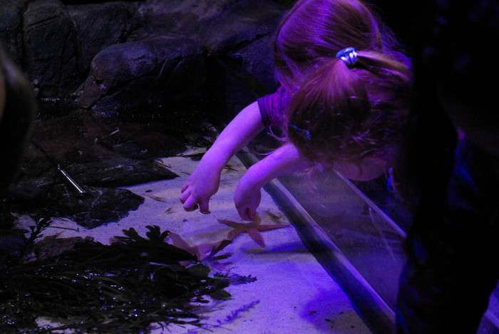 Touch pool at Sea Life Manchester