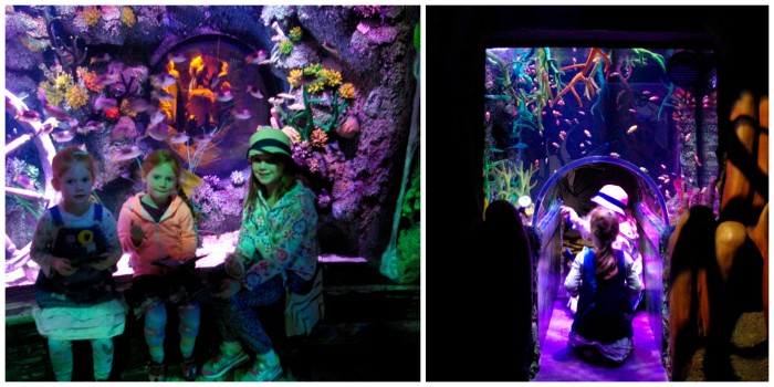 Rocky Hideout at Sea Life Manchester