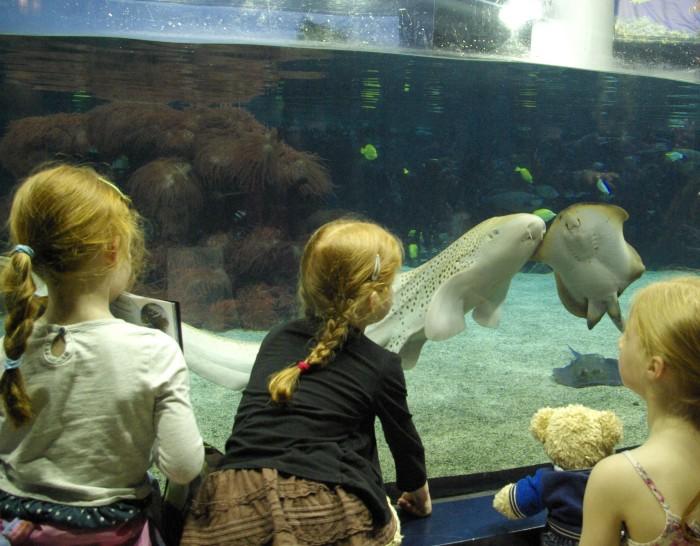 Watching fish at The Deep Hull