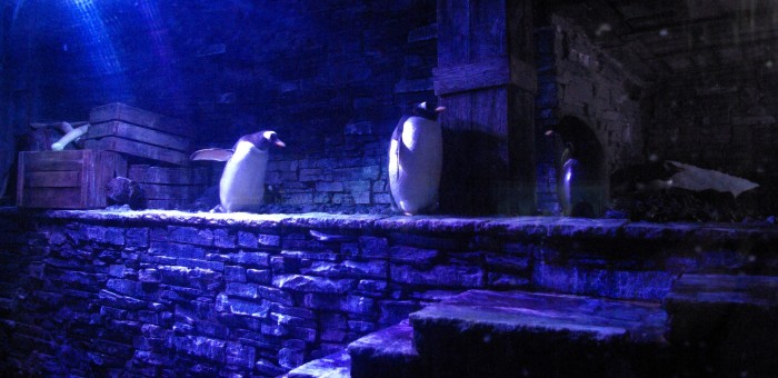 Penguins at The Deep Hull