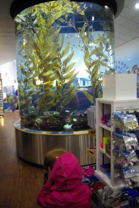 The gift shop at The Deep Hull