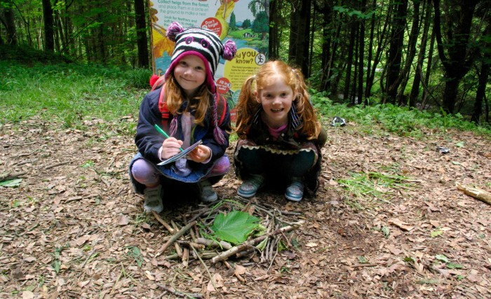Making a nest from sticks at Dalby Forest
