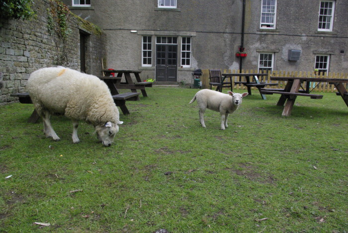 Sheep in the garden at YHA Grinton Lodge