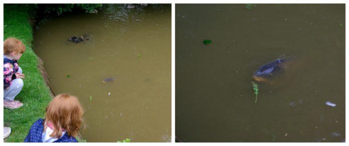 eeding the fish at Crealy Adventure Park