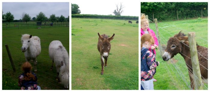 Meeting the ponies and donkeys at Crealy Adventure Park