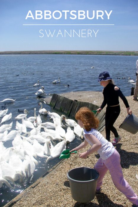 A review of Abbotsbury Swannery Dorset